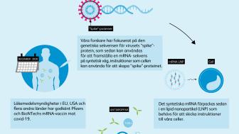 Så fungerar mRNA-vaccin