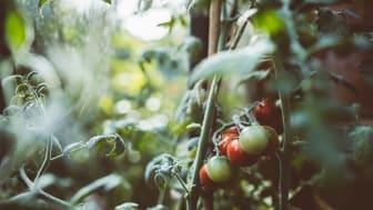 Att odla i växthus är både roligt och enkelt.