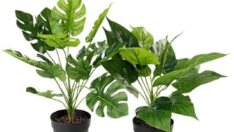 SPLURGE OR SAVE: FAUX IS THE WAY TO GO - PLANTS