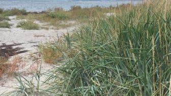 Hur stranden kan komma att se ut efter avslutat projekt.