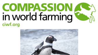 African penguins face extinction within 15 years, warn campaigners on World Penguin Day