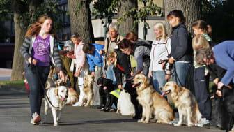 Lions Førerhundskole og Mobilitetsenter har eget oppdrett av førerhunder.  Valpene bor det først året hos en vertsfamilie og møtes til trening hver 14. dag.