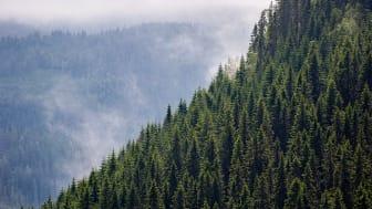 Kina planterar 30 miljoner hektar skog, och de är inte ensamma