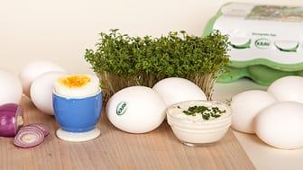 Fler bönder KRAV-märker sin äggproduktion