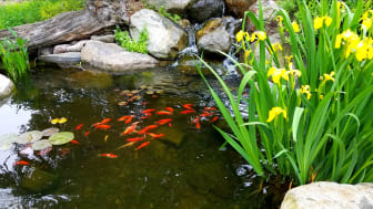 EXPERT COMMENT: Ponds can absorb more carbon than woodland – here's how they can fight climate change in your garden
