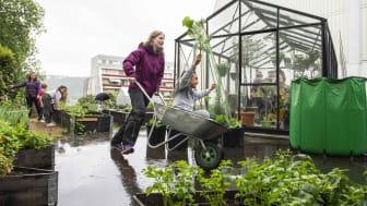 Flere organisasjoner får støtte til skolehager og andre dyrkeprosjekter denne våren. Tokerudåsen Boligsameie driver urban dyrking på Stovner i Oslo. Nå får de støtte til å utvide dyrkeområdet. (Foto: Katrine Lunke)