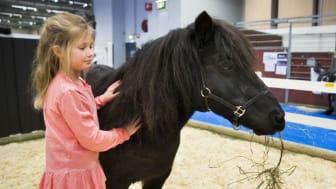 På EuroHorse finns allt för dem som älskar hästar. Foto: Anna Sigvardsson Högborg.