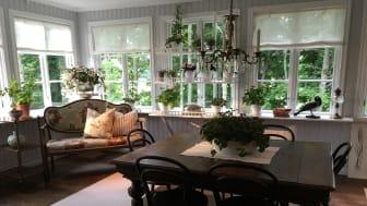 Svenskodlade krukväxter skapar stämning i Sommar med Ernst