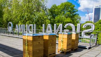 Insgesamt zehn Bienenvölker siedeln jetzt an zwei Hamburger Standorten der SIGNAL IDUNA. Foto: SIGNAL IDUNA