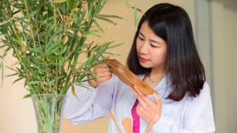 Snart kan du finde bambus i din bil