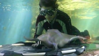 Avsnitt 2: Aquaria tömmer sitt havsakvarium
