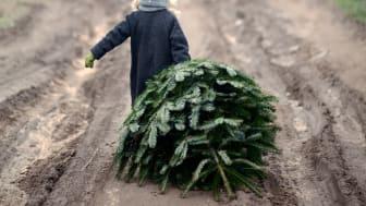 Ensam gran söker julklappar