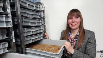 Mjölmasken är på framfart och på Tebrito i Orsa satsar man för fullt för att kunna möta marknadens efterfrågan. Man har nyligen anställt fransyskan Justine Rougé som arbetar som insektsforskare.