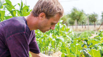 Hvilan Utbildning utbildar odling som snabbutbildning i coronakrisen