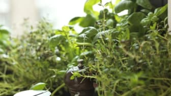 Scandic har utsetts till en av de bästa i ekomat-branschen