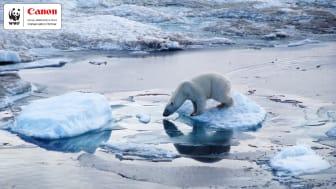 Canon och WWF firar 10 år av framgångsrikt samarbete