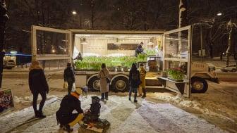 Tulpanglädje utomhus med Blomsterfrämjandets mobila tulpanväxthus