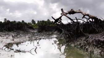 Nigeria: Shell måste sanera Nigerdeltat