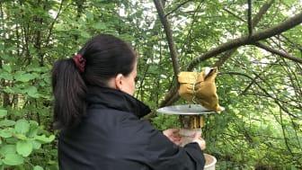 Karlstads kommun undersöker myggproblem