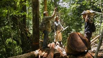 Verdens Skove arbejder for at forbedre certificeringspolitikkerne for skovforvaltere som oprindelige folk og landsbyer i Latinamerika. Foto: Mike Kollöffel