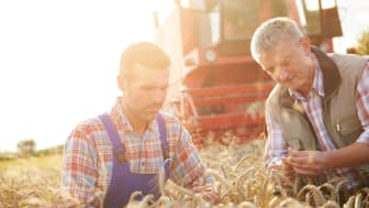 Mondelez_Sustainability Wheat Farmer.jpeg