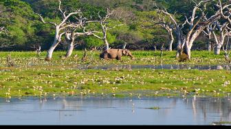 Naturupplevelser och djurliv lockar besökaren till Sri Lanka