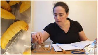 Larverna äter plastavfall och blir mat på rymdresor