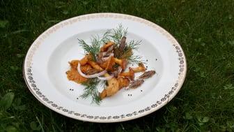 Rostade hussyrsor, smörstekta kantareller, dill, inlagda lökringar och senapsfrön. Foto: Mia Petersson, SLU