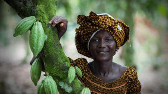 Kakaoodlaren Alphonsine N'Guetia på kooperativet Coopaza i Elfenbenskusten är en av dem som påverkas av Ben & Jerry's ökade betalning. Foto: Simon Rawles