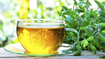 Herbs that can boost your mood and memory