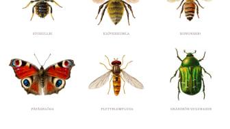 Pollinera Sverige vill bidra till att gynna pollinerande insekter. Illustration: Aron Landahl.
