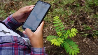 2020_TakingRoot Technician using FARM-TRACE-mobile to record a newly planted tree (1).JPG