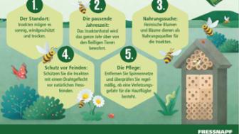 5 Tipps für Ihr Insektenhotel.png
