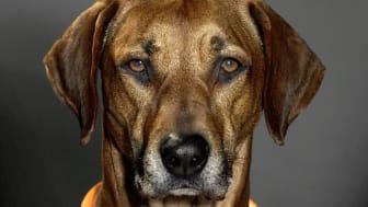 Lysande Hundhalsband får din hund att synas i mörkret