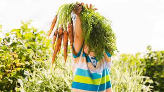 Codex Alimentarius - Nya allmänna principer för livsmedelshygien och HACCP
