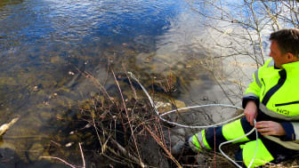 I løpet av senhøsten 2017 skal NGI levere en rapport til Miljødirektoratet om hvor de fluorerte miljøgiftene i Tyrifjorden stammer fra.