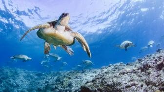 Sköldpaddans resa