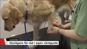 foto: TV4 Nyheterna