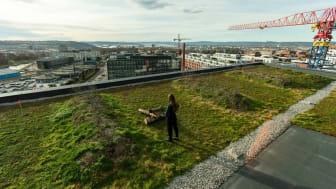Ambisiøse utviklere bidrar til å utvikle byens økologi. Her fra taket på kontorbygget K5 på Hasle Linje. Foto: Max Emanuelson/AF Gruppen.