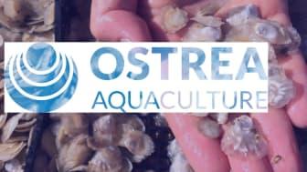 En utmaning för en entreprenör - Ostrea Aquaculture söker en VD