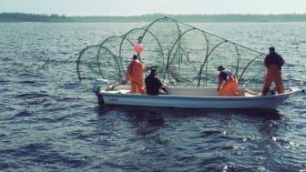 Foto: Håkan Carlstrand, Havs- och vattenmyndigheten