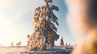 Sälen snö januari 2021