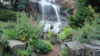 Välkommen till Botaniska trädgården - en kväll med hälsa, glädje och gemenskap i fokus.