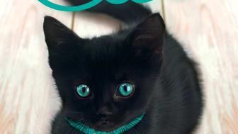 Katten Cleo - en sann bok om katters läkande kraft