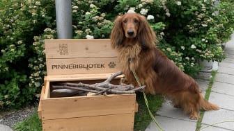 Det er mange hunder som får sin daglige tur langs Akerselva, forbi Teknisk museum. Foto: Sabine Schranz/Teknisk museum