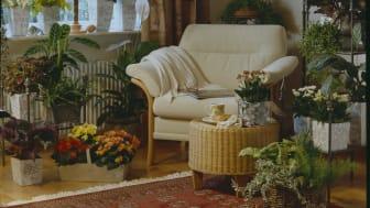 Hur, vilka och var krukväxter har använts har skiftat de senaste 50 åren. Kerstin Ahlvin ger oss en återblick.