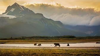 Alaska©GettyImages-519098442