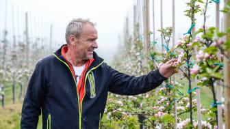 sydGrönt har alltid en grön tanke i allt vi gör. Här är vår odlare Tomas i sin blommande äppelodling.