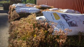 Leveransklara sedummattor med biokol