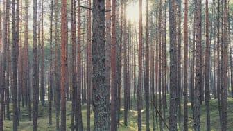 Abkati och Nordic Lights ställer ut på SkogsElmia